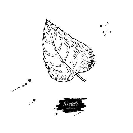 Nettle drawing illustration.
