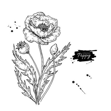 ケシの花のベクトル図面セット。隔離された野生植物と葉の花束で。ハーブの刻まれたスタイルの図。詳細な植物スケッチ