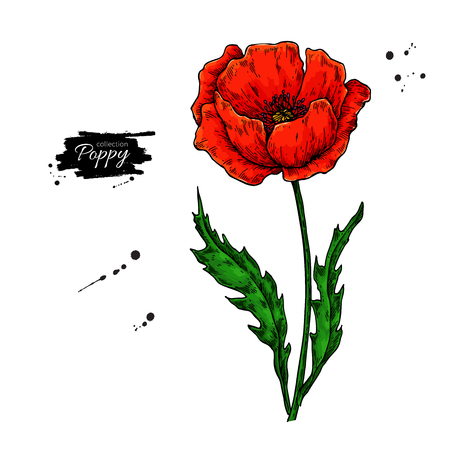 Poppy flower vector drawing set. Isolated wild plant and leaves in bouquet. Herbal artistic style illustration.
