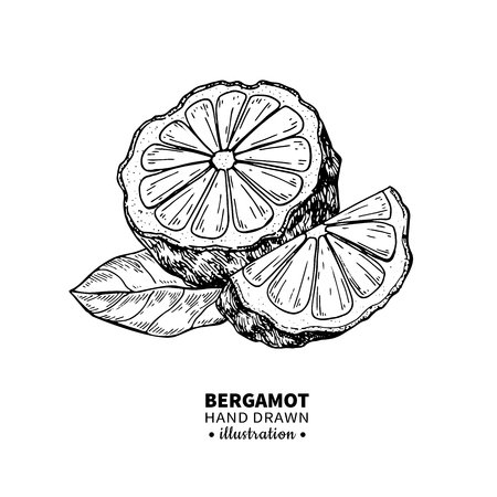 Bergamot vector drawing. Isolated vintage  illustration of citrus fruit with slices. Organic food. Essential oil engraved style sketch. Beauty and spa, cosmetic and tea ingredient. Çizim