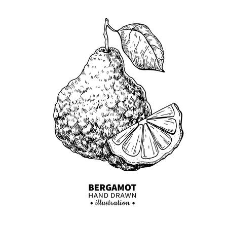 Bergamota dibujo vectorial. Aislado vintage ilustración de citru Foto de archivo - 83256980