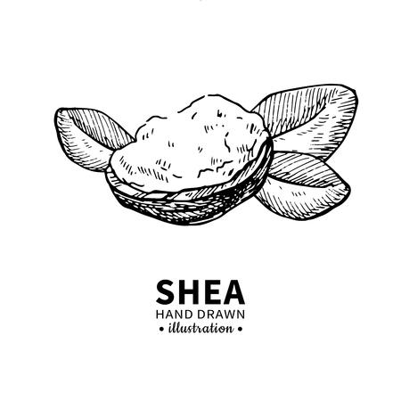 Shea butter vector drawing. Isolated vintage illustration of nuts. Organic essential oil engraved style sketch. Stock fotó
