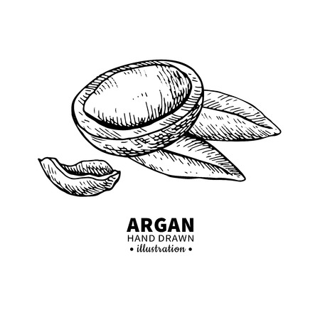 Argan vector drawing. Isolated vintage  illustration of nut. Organic essential oil engraved style sketch. Beauty and spa, cosmetic ingredient. Great for label, poster, flyer, packaging design. Illustration