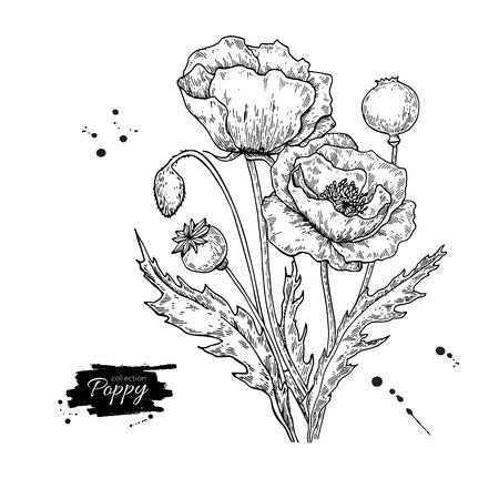 ケシの花のベクトル図面セット。隔離された野生植物と葉。