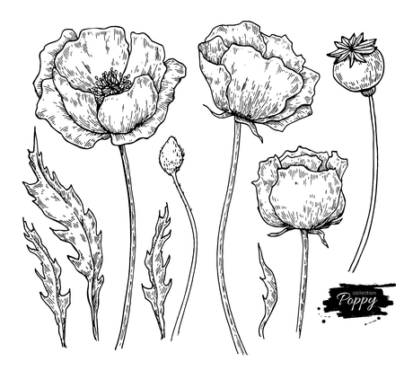 Poppy flower vector drawing set. Isolated wild plant and leaves.