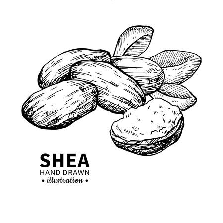 Sheaboter vectortekening. Geïsoleerde uitstekende illustratie van noten. Biologische gegraveerde stijlschets met essentiële olie. Stock Illustratie