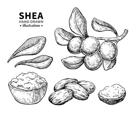 Sheaboter vectortekening. Geïsoleerde uitstekende illustratie van noten. Biologische gegraveerde stijlschets met essentiële olie. Stockfoto