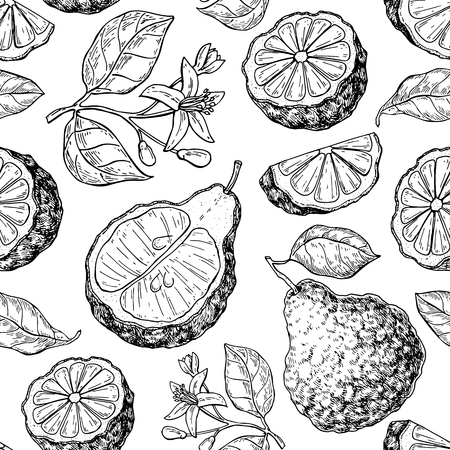 Bergamot vector seamless pattern drawing. Isolated vintage background of citrus fruit with flower and slice. Organic food. Essential oil engraved style sketch. Beauty and spa, cosmetic and tea ingredient. Vettoriali