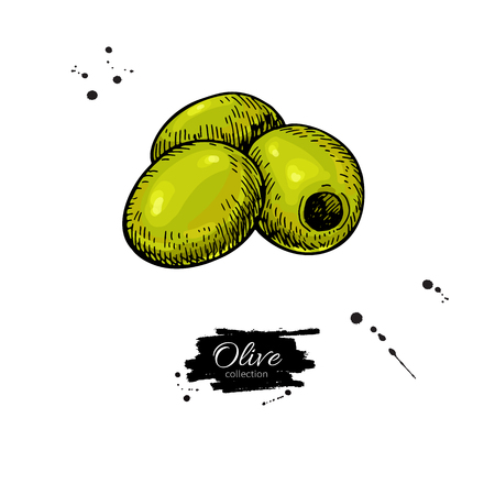 Pitted olive. Hand drawn vector illustration. Isolated drawing on white background. Italian cuisine. Illustration