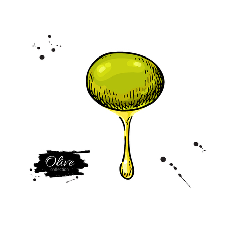 Olive with oil drop. Hand drawn vector illustration. Isolated drawing on white background. Illustration