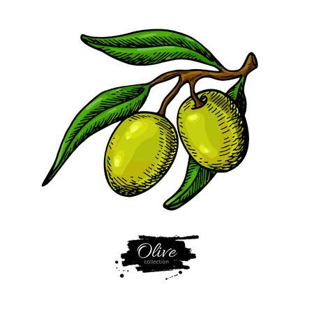 Olive branch hand drawn illustration.