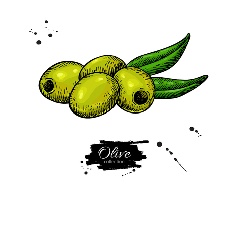 Pitted olive with leaves hand drawn illustration.