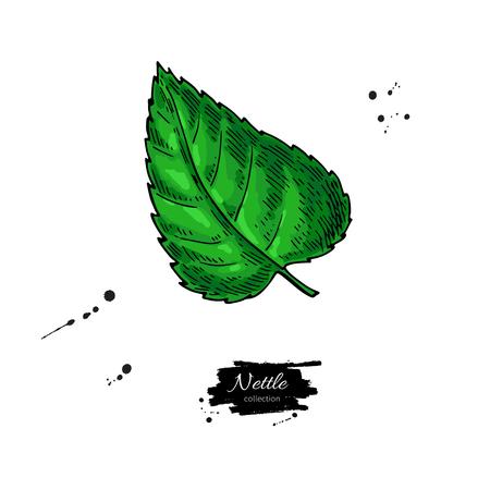 Nettle vector tekening. Geïsoleerde medische plant met bladeren. kruid
