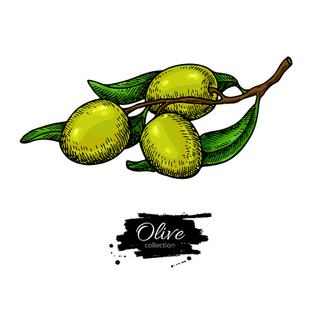 Olive branch Hand drawn vector illustration