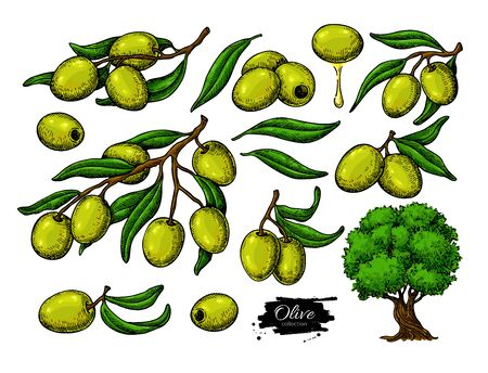 Olive set. Hand drawn vector illustration of branch with green food, tree, oil drop.