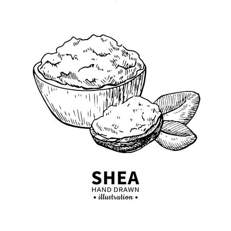 Shea fruit nuts drawing. Ilustrace