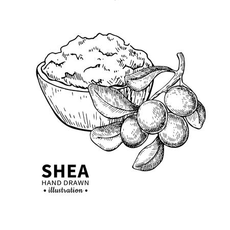 Shea nuts drawing.