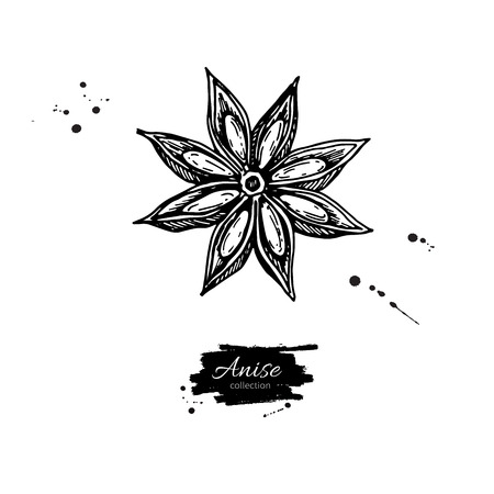 Anise Star Vector drawing. Hand drawn sketch. Seasonal food illustration isolated on white. Engraved style spice and flavor object. Cooking and aromaterapy ingredient.