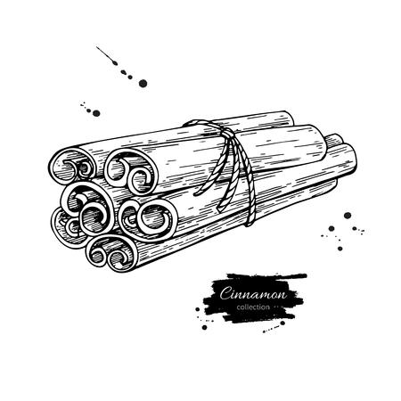 Cinnamon stick tied bunch Vector drawing. Hand drawn sketch. Sea