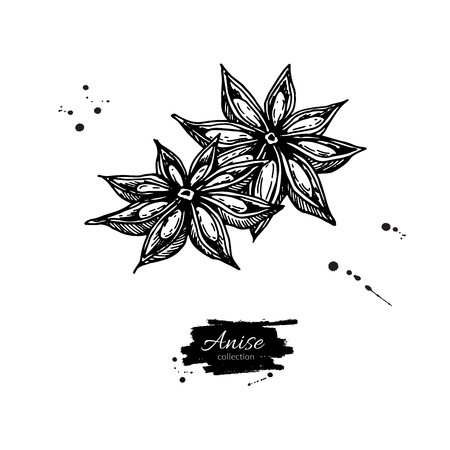Star Anise Vector drawing. Hand drawn sketch. Seasonal food illustration isolated on white. Engraved style spice and flavor object. Cooking and aromaterapy ingredient.