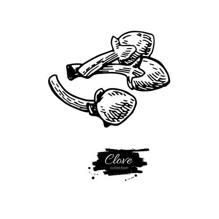 정향 벡터 드로잉입니다. 손으로 그린 스케치입니다. 계절 음식 그림 화이트에 격리입니다. 새겨진 된 스타일 향신료와 맛을 객체. 요리 및 아로마 테 일러스트