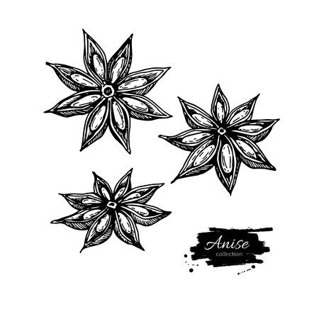 Anise Star Vector drawing. Hand drawn sketch. Seasonal food illu Illustration