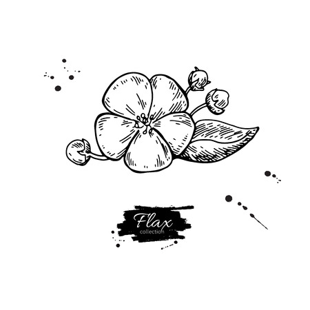 Vlas bloem hand getrokken illustratie. Stock Illustratie