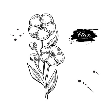 Flax flower hand drawn illustration.