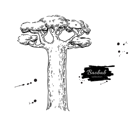 Baobab tree hand drawn illustration.