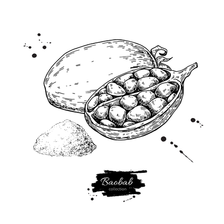 Baobab vector superfood drawing. Isolated hand drawn  illustrati