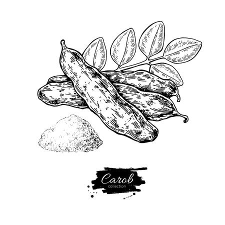 Carob vector superfood drawing. Isolated hand drawn  illustratio