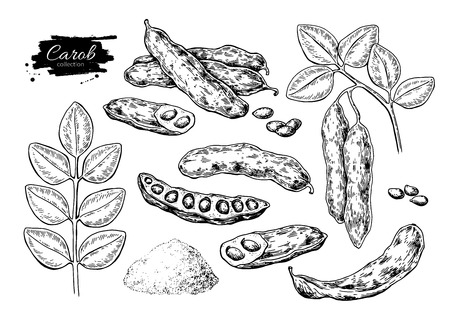 Carob  superfood drawing set. 矢量图像