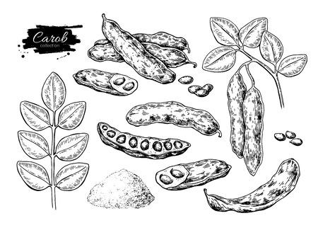 Carob  superfood drawing set. Illustration