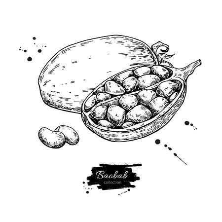 バオバブ ベクトル スーパー フードを描画します。隔離された手は、白い背景の上の図を描いた。有機健康食品。バナー、ポスター、ラベルに最適