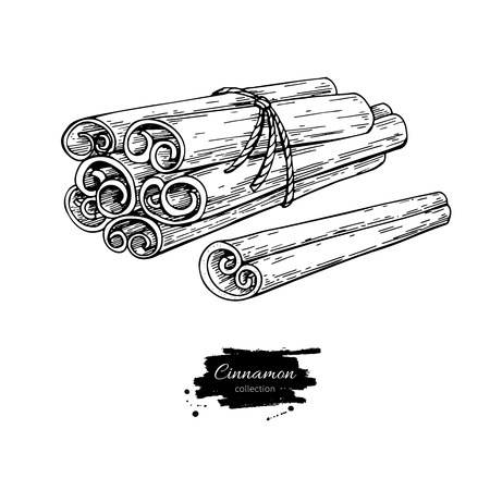Cinnamon stick tied bunch Vector drawing. Hand drawn sketch. Seasonal food illustration isolated on white. Engraved style spice and flavor object. Cooking and aromaterapy ingredient.