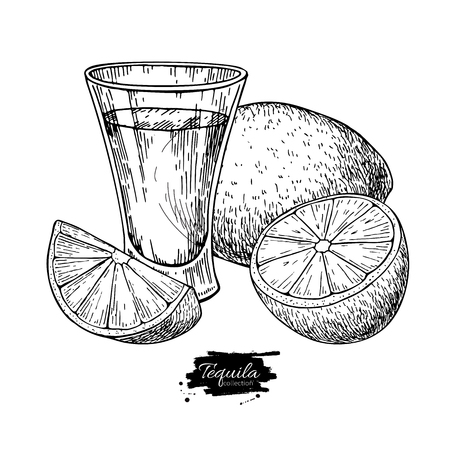 Tequila shot glass with lime. Mexican alcohol drink vector drawing.