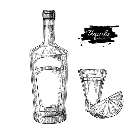 Tequila bottle and shot glass with lime. Mexican alcohol drink vector drawing.