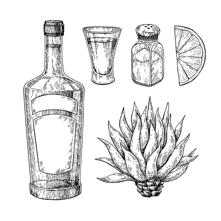 Tequila bottle, blue agave, salt shaker and shot glass with lime. Mexican alcohol drink vector drawing.