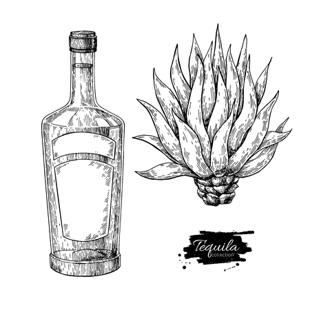 Tequila bottle with blue agave. Mexican alcohol drink vector drawing. Sketch of cocktail