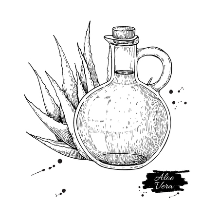 Aloe Vera juice in pitcher bottle. Hand drawn vector illustration. Isolated plant drawing for  alternative medicine, beauty and spa, cosmetic ingredient. Sketch for label, poster, flyer, packaging design.