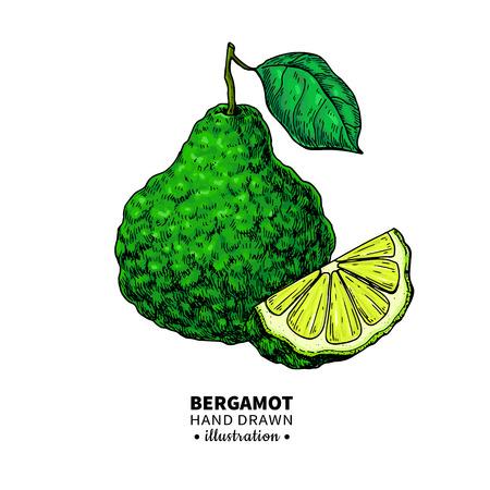 Bergamot hand tekenen illustratie.