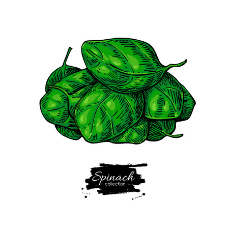Spinach leaves heap hand drawn vector. Isolated Vegetable illustration. Çizim