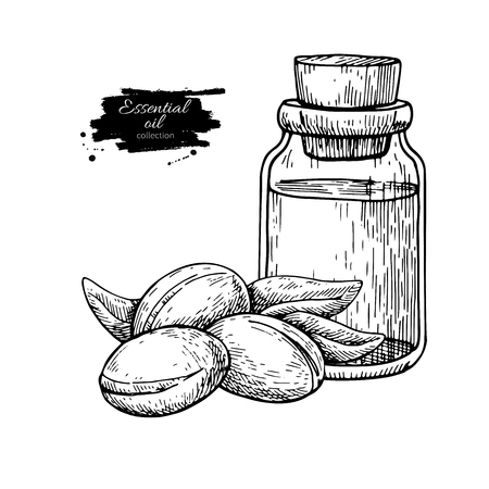 Argan essential oil bottle hand drawn vector illustration. Isolated plant drawing for Aromatherapy treatment, alternative medicine, beauty and spa, cosmetic ingredient. Great for label, poster, flyer, packaging design. Illustration