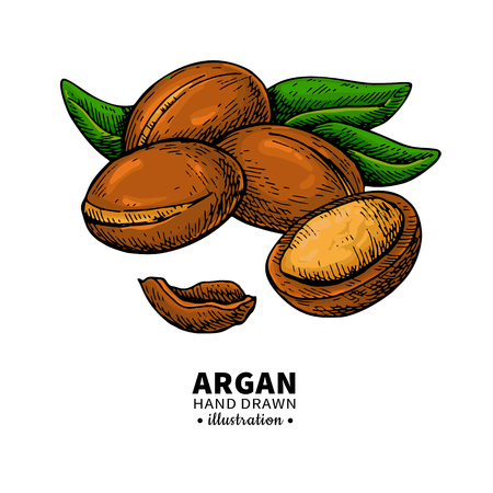 Argan vector drawing. Organic essential oil sketch..