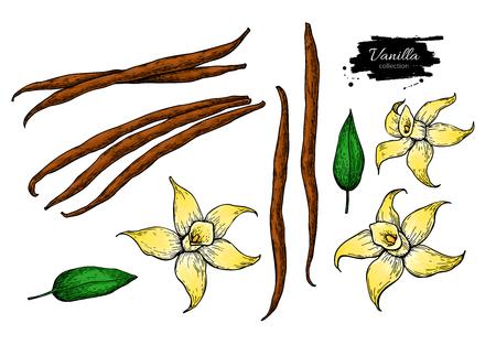 Vanilla flower and bean stick vector drawing set. Hand drawn sketch food illustration. Illustration