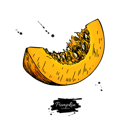 Pumpkin sliced piece vector drawing. Isolated hand drawn object.