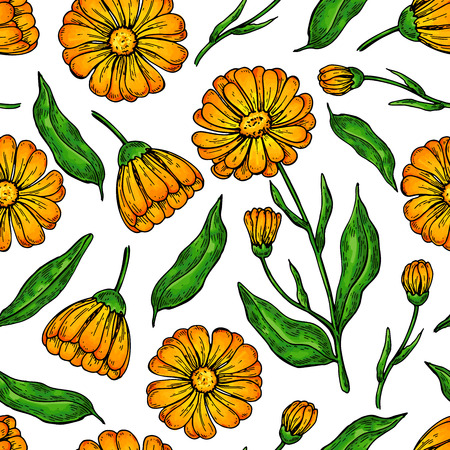 Calendula seamless pattern. Isolated medical flower and leaves.