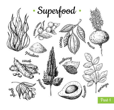 Super jedzenie ręcznie rysowane ilustracji wektorowych. Rysunek szkic botaniczny na białym tle, pirulina, kakao, quinoa chleb świętojański moringa goji, maca. Ekologiczna zdrowa żywność idealna na baner, plakat i etykietę.