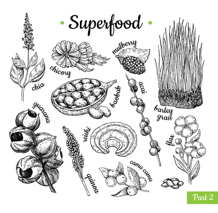 Super food hand drawn vector illustration. Botanical isolated sketch Zdjęcie Seryjne - 93845499