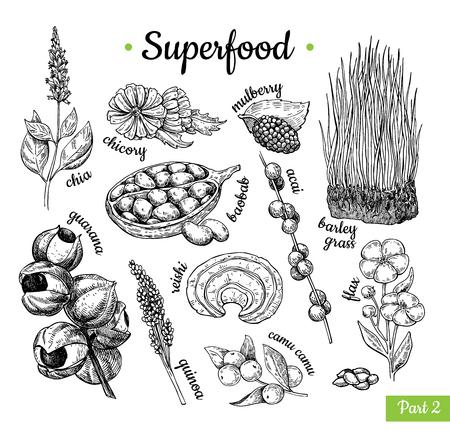 Super voedsel hand getekend vectorillustratie. Botanische geïsoleerde schets